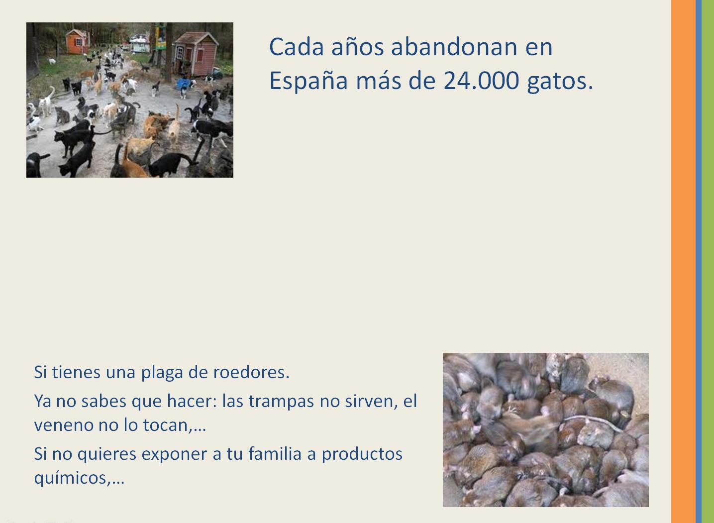 Proyecto CDI